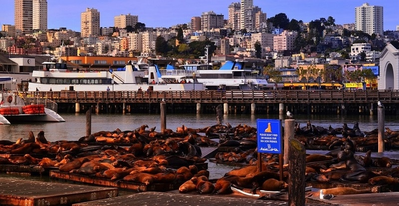 Sea lions on the pier