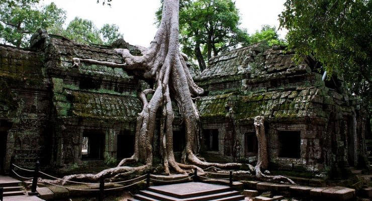 Tree and its roots enveloping a building in Angkor