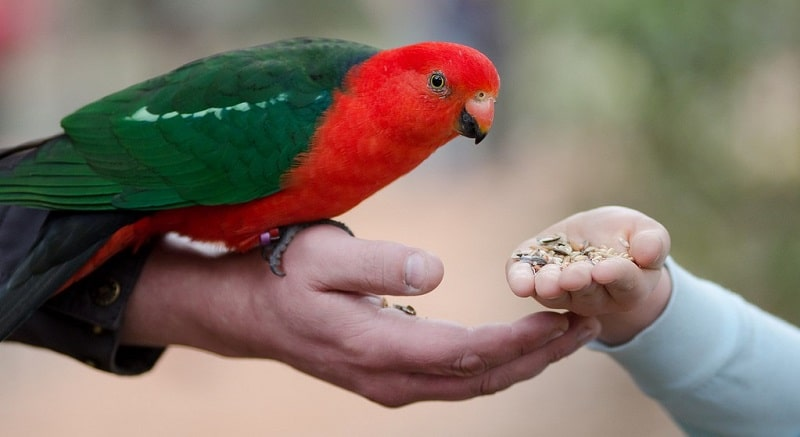 A parrot being hand-fed