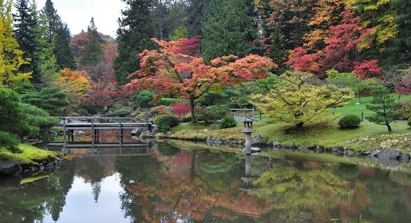 Japanese garden at the Washington Park Arboretum