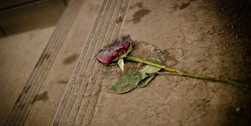 A crushed red rose on a step