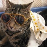 A pet cat dressed as Elvis Presley