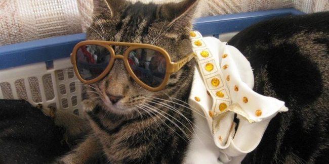A pet cat dressed as Elvis Presley