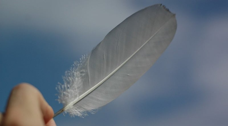 A bird's feather held between a person's fingers