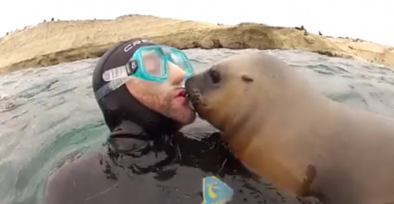 How These Sea Lions React To Humans Is Just Adorable