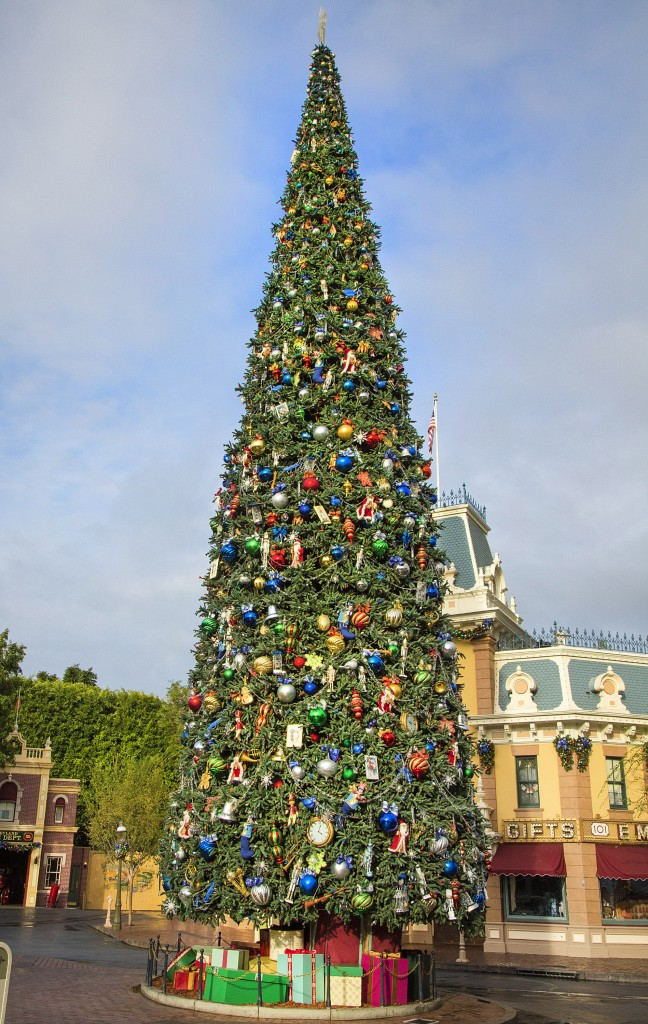 "MAJESTIC CHRISTMAS TREE (ANAHEIM, Calif.) – For Holidays at the Disneyland Resort, a towering Christmas tree stands 60 feet tall at Town Square at Disneyland Park. This year, dazzling blue accents and bows decorate the tree in honor of the Disneyland Resort Diamond Celebration. The Holidays are a magical time to create unforgettable memories with loved ones at the Disneyland Resort. This merry season runs Nov. 13 through Jan. 6, 2016, as Disneyland park transforms into a dazzling winter wonderland with beautiful décor and attractions created for the season – ""it's a small world"" Holiday and Haunted Mansion Holiday. This year, the Diamond Celebration adds even more sparkle to the festive entertainment with the ""Paint the Night"" parade and ""Disneyland Forever"" fireworks spectacular. (Paul Hiffmeyer/Disneyland Resort)"