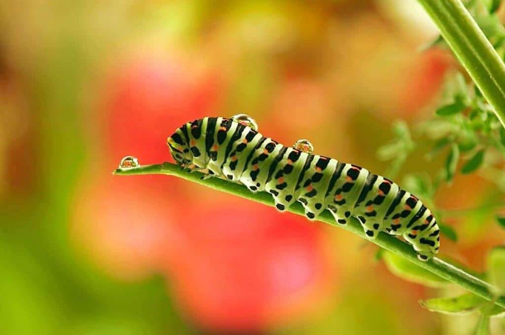 An amazing caterpillar picture