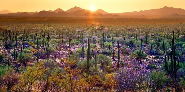 Sunset at Saguaro National Park, Arizona, one of the US's best national parks