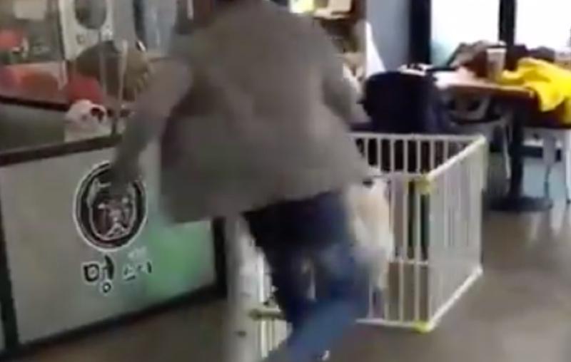 Dog Escapes