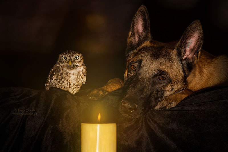 dog-owl-best-friends-1