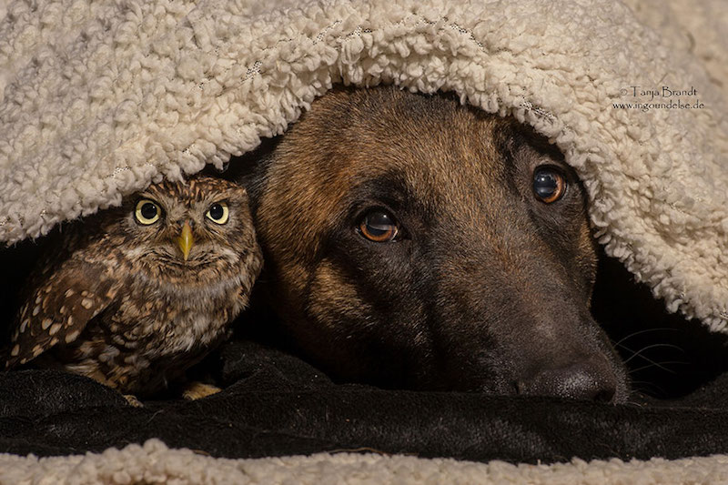 dog-owl-best-friends-10