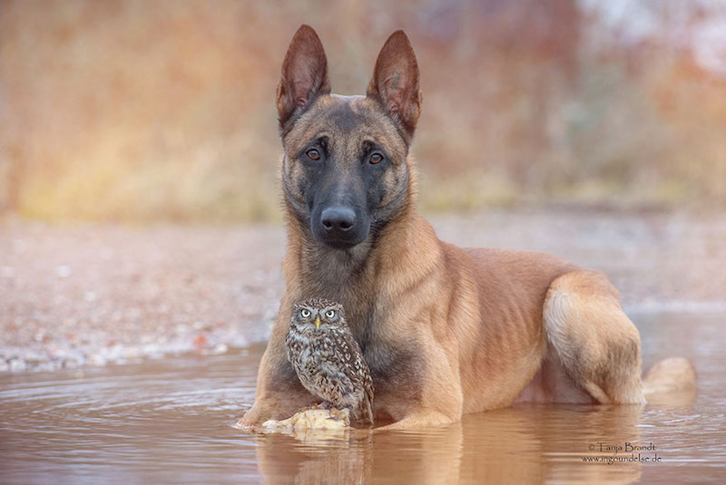 dog-owl-best-friends-11