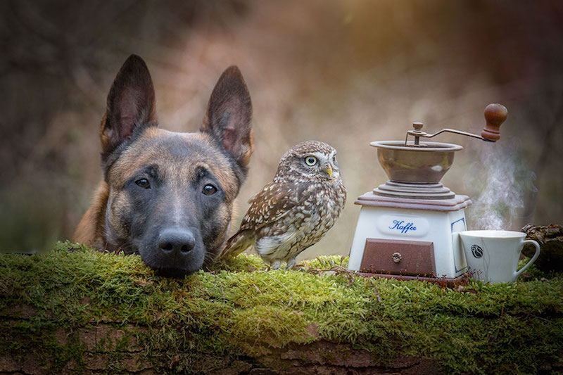 dog-owl-best-friends-13