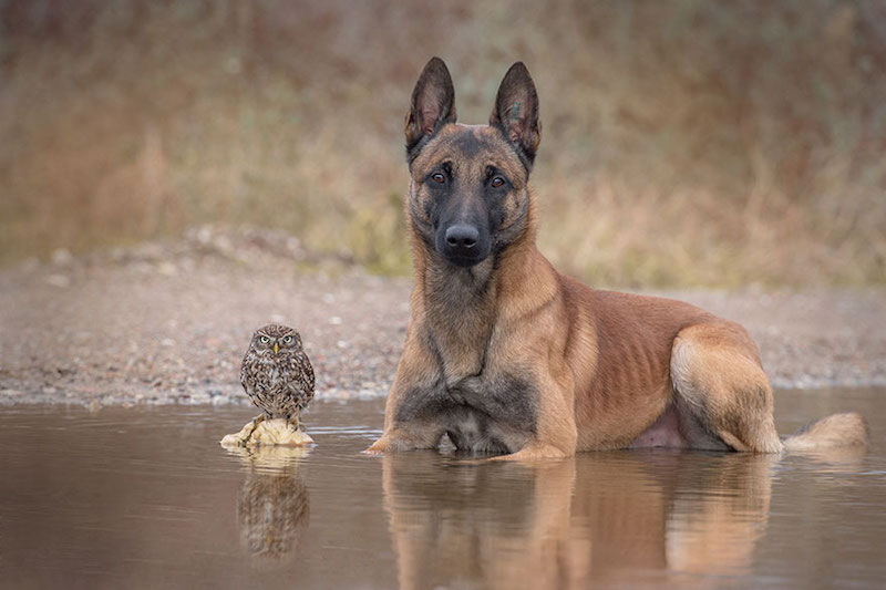dog-owl-best-friends-14