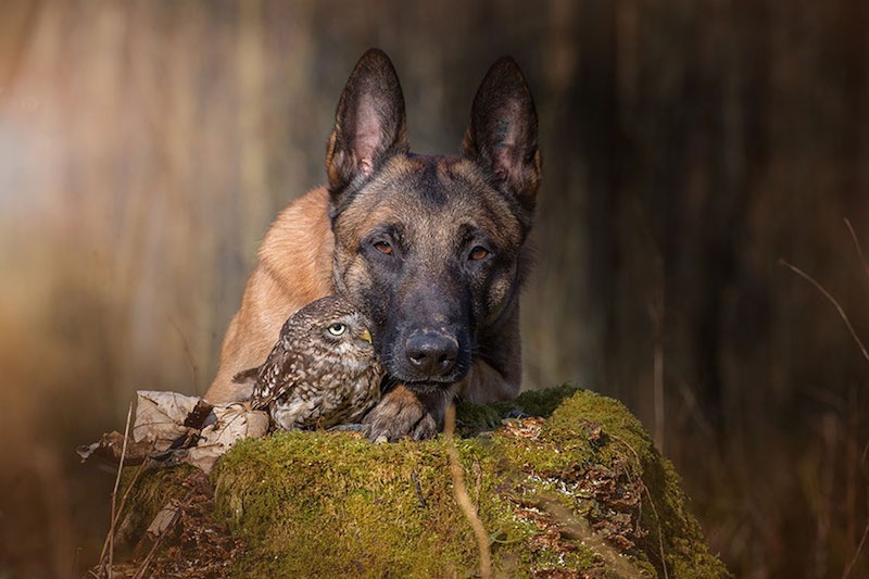 dog-owl-best-friends-2
