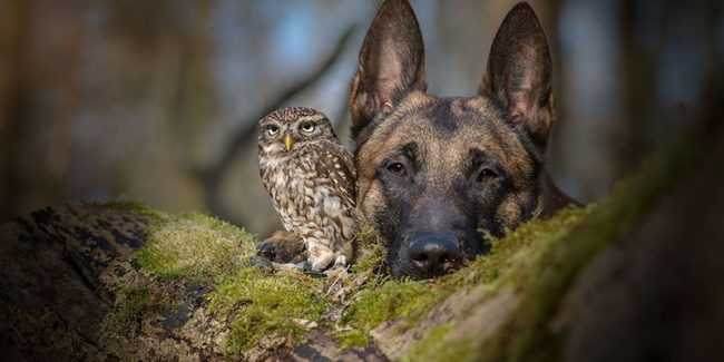 This dog and owl are the unlikeliest of best friends