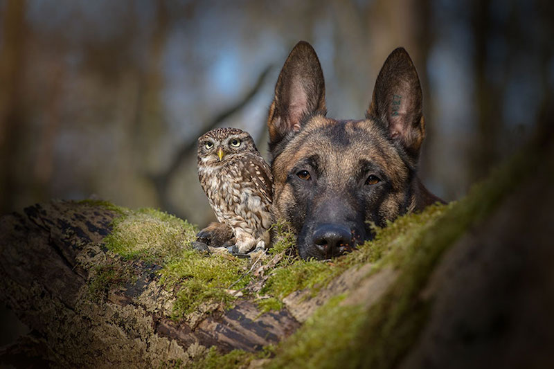 dog-owl-best-friends-4