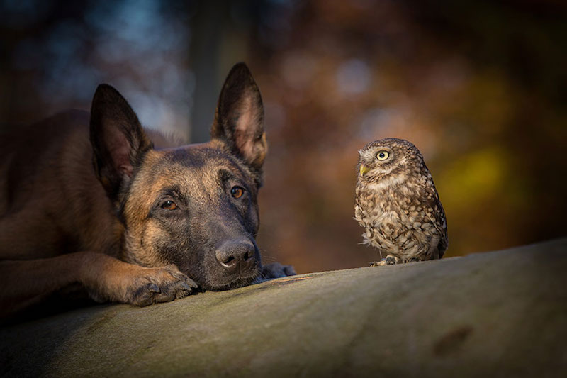 dog-owl-best-friends-6