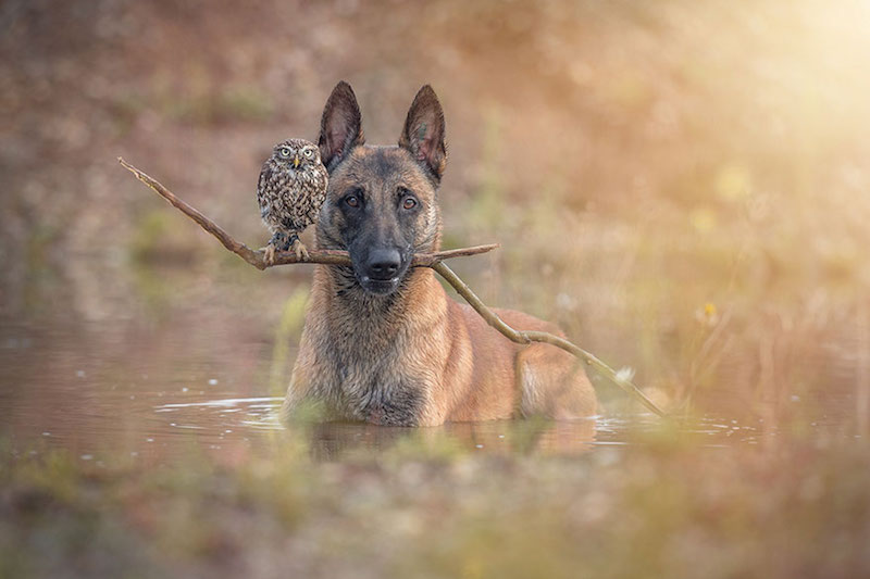 dog-owl-best-friends-8