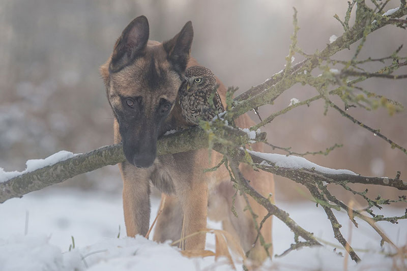 dog-owl-best-friends-9