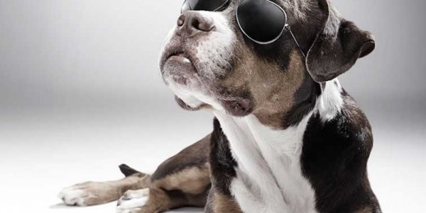This animal shelter has turned itself into a talent agency for dogs