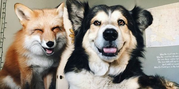 This fox and dog are the best of friends