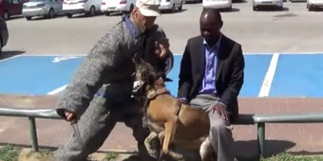 This dog will protect you from knife attacks in a split second