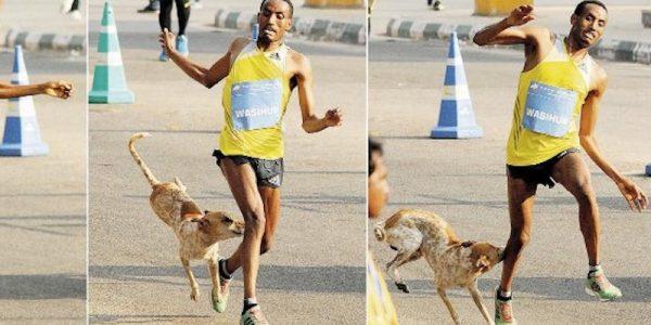 Stray dog bites pro runner in leg costing him race