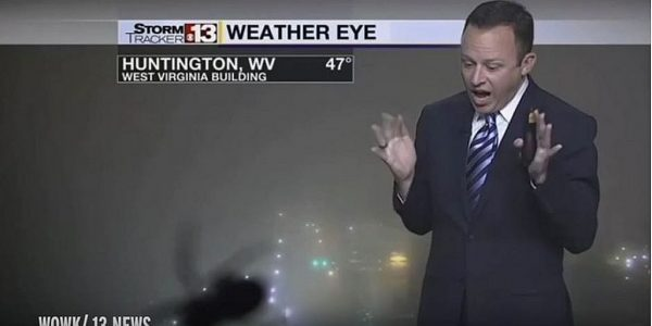 Watch as weathermen scream like girls over spiders on the air