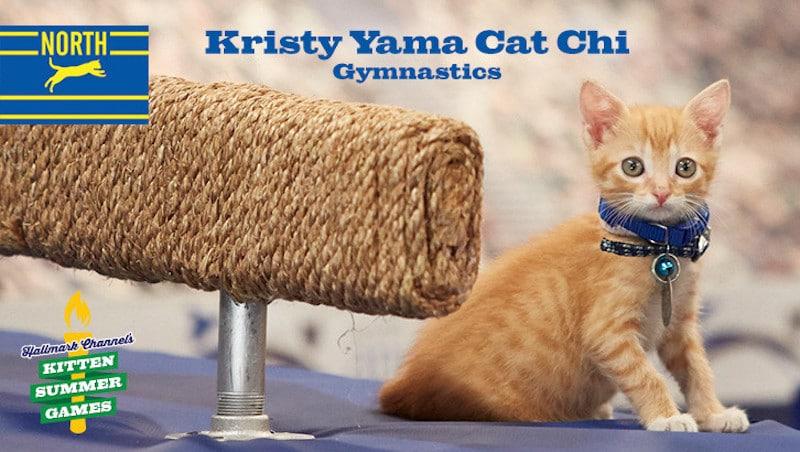 kitten-summer-games-1