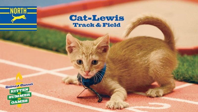 kitten-summer-games-12