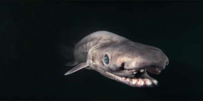 10 very weird sea creatures