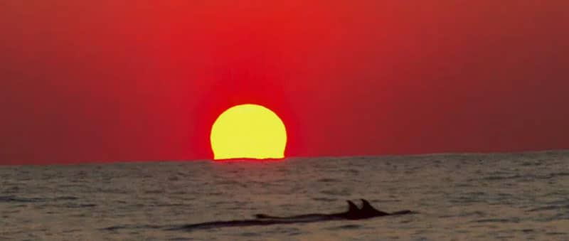 It's Spy vs. Spy on Wicked Tuna: Outer Banks