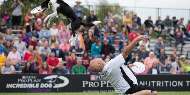 These photos from the Purina Incredible Dog Challenge will make your day