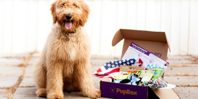 PupBox: How to buy Shark Tank dog treat and training box