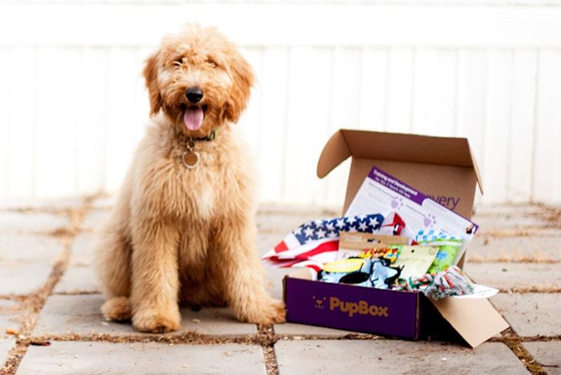 pupbox - PupBox: How to buy Shark Tank dog treat and training box