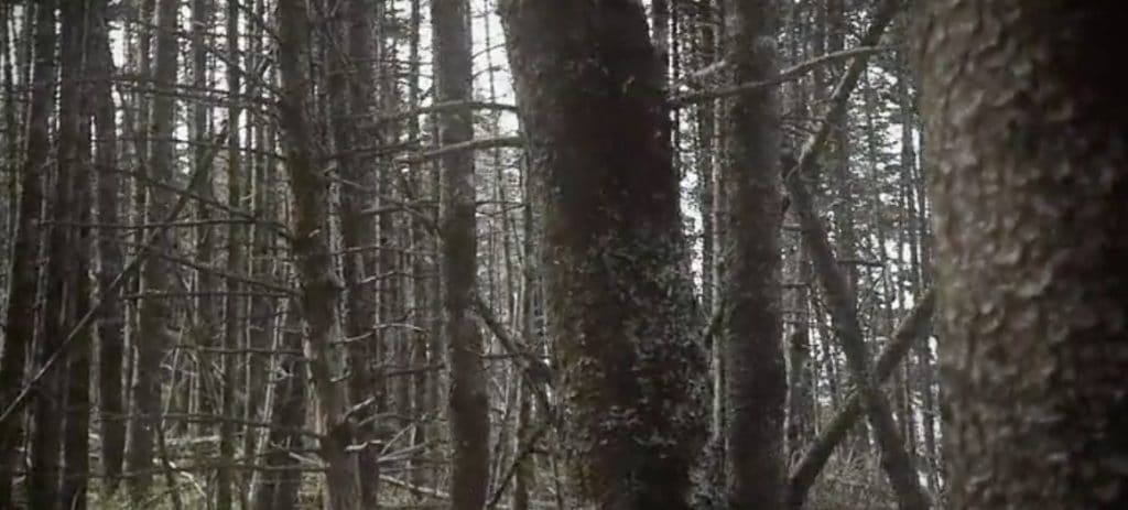 The curse is not real right? The island's interior forest
