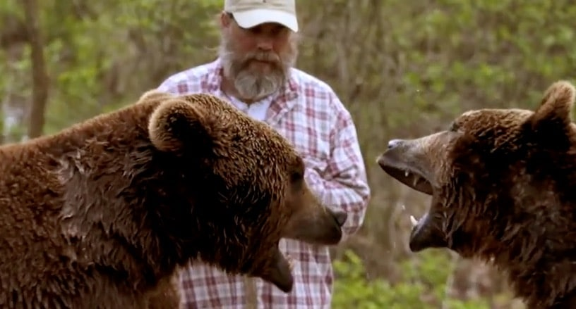 Bob and Screech face off in Project Grizzly