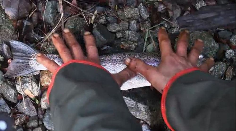 Dave's hands and a fish