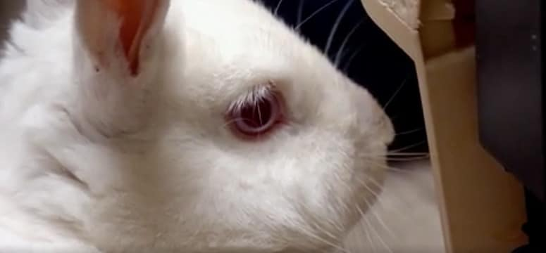 Snow the rabbit has some unwelcome guests