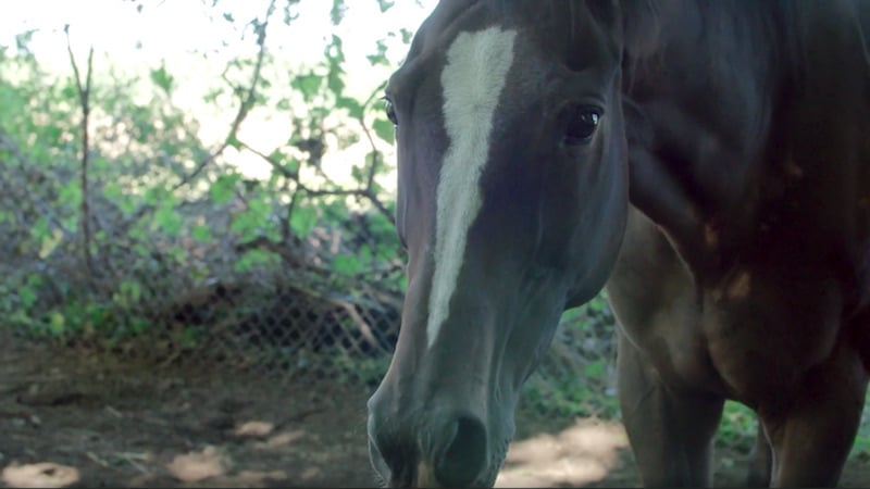 One of the starving horses investigated on this week's The Guardians on Animal Planet