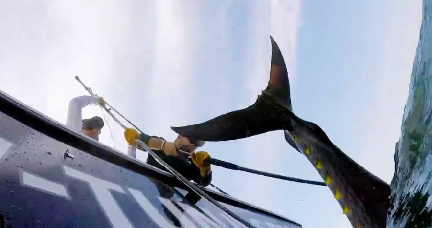 Wicked Tuna landing a big fish