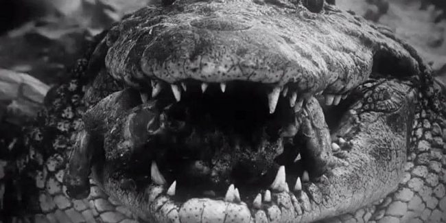 Swamp People: Everglades hunt for Nile crocodiles in Monster in the Dark
