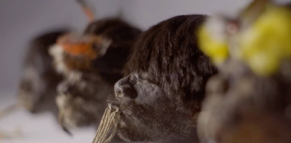 Several shrunken heads