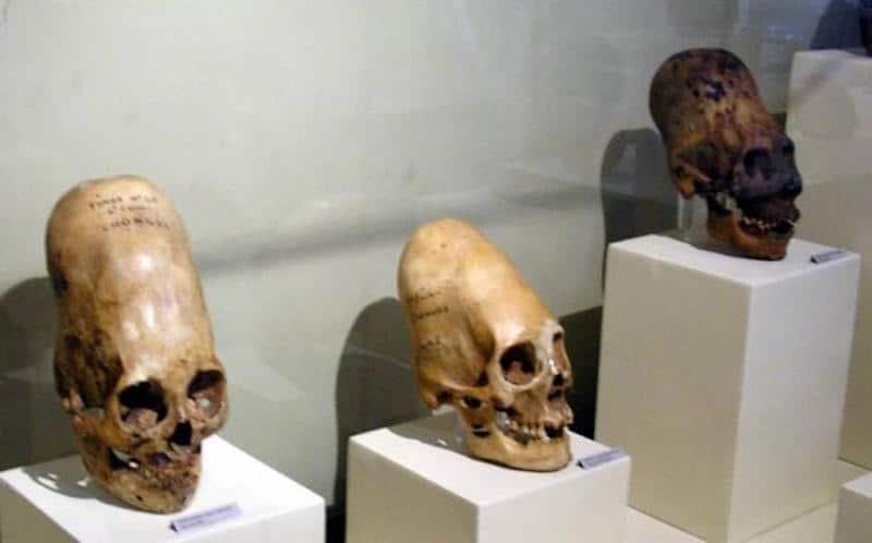 Three of the Paracas skulls