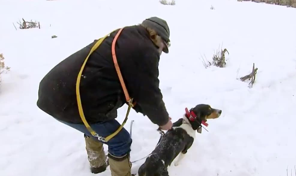 Rich takes his dogs for a training run on Mountain Men