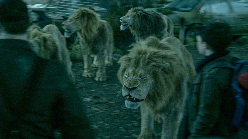 A pack of lions in the premiere of Zoo Season 3