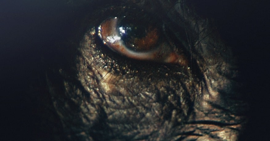 Close-up of a chimpanzee's eye from Rise of the Warrior Apes