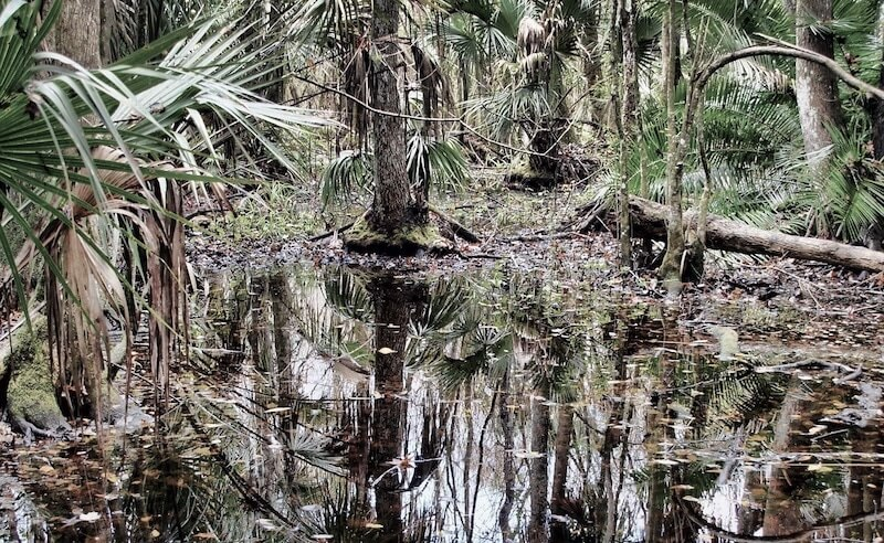 A swamp in Florida