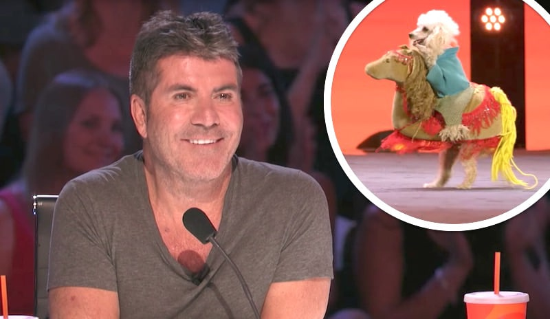 Simon Cowell grinning and a dog looking as if it's riding a horse on America's Got Talent